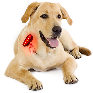 safety lights for dogs