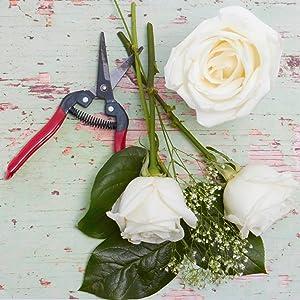 Amazon flowers one dozen white roses free vase included one dozen white roses delivered wrapped in green tissue paper mightylinksfo