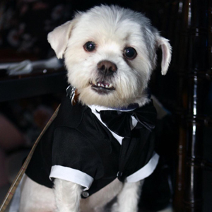 Amazon.com: Kuoser - Camisa para perro, para cachorro o ...