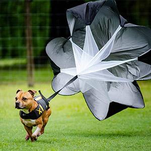 Dog Parachute