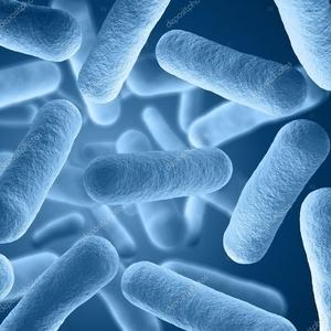 probiotics 100 billion