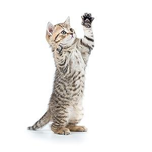 Playing kitten/cat