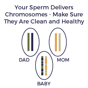 FertilAid, DNA, chromosomes, sperm integrity