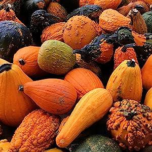 Passback Pumpkin
