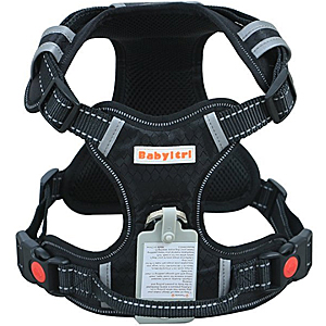 Best giant breeds harness for hiking