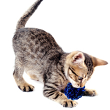 upsimples Cat Toys Including Cat Teaser Wand Interactive Feather Toy Fluffy Mouse Mylar Crinkle Balls Catnip Pillow for Kitten Kitty 18