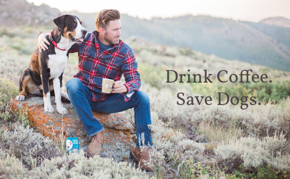drink coffee save dogs hugo roasters cold brew coffee packs easy to use