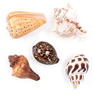 Tiny Sea Shells, Mixed Ocean Beach Spiral Seashells, Craft Charms, Beach Theme Party, Candle Making