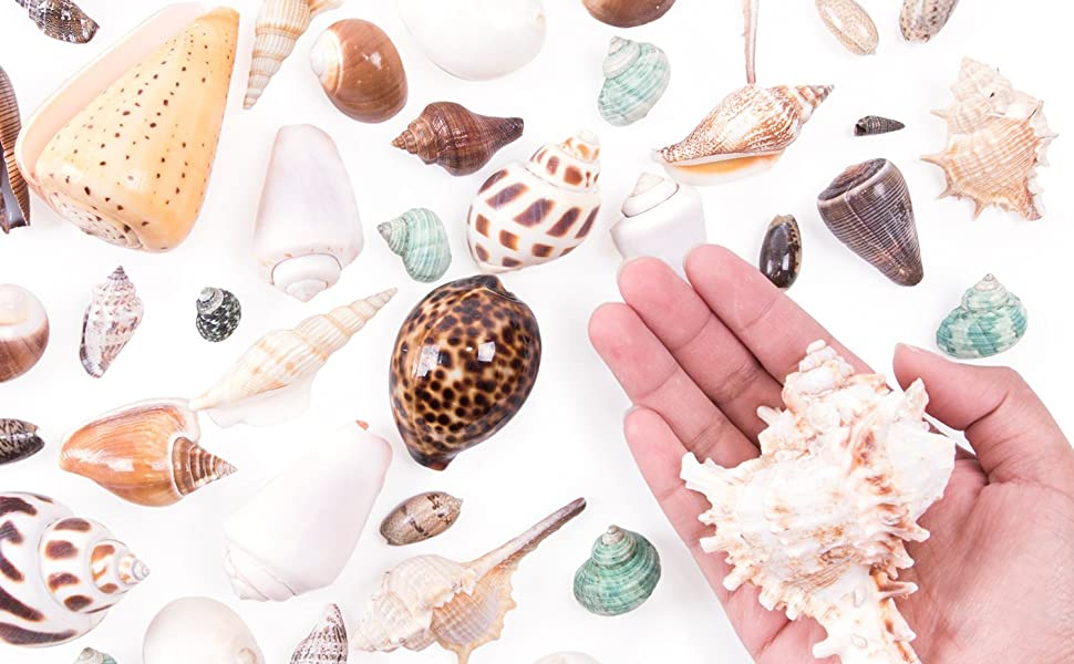 Tiny Miniature Fairy Garden Beach Critter Seashells, Marine Life Collection, summer Party Favors
