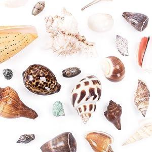 Sea Shells Mixed Beach Seashells Starfish Beach Theme Party, luau party decoration, baby shower boy