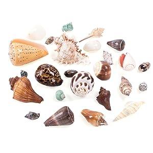 Beach Spiral Seashells, Beach Theme Party Wedding Decor, Fish Tank Vase Fillers, little mermaid