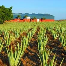 Curaloe Plantation Curacao field aloe vera plant manufacturing production facility green organic