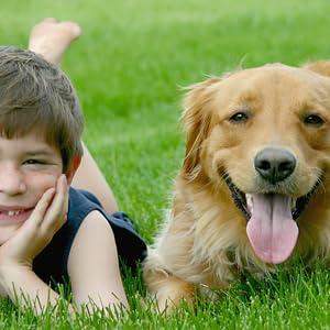 dog pests