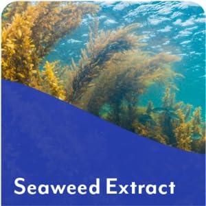 seaweed extract probiotic