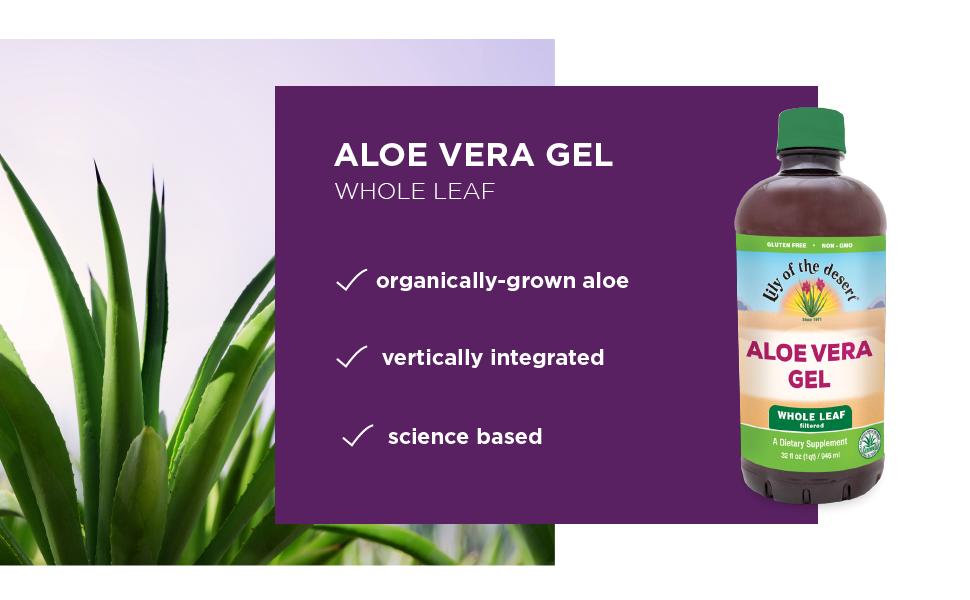Amazon.com: Lily Of The Desert - Gel de aloe vera para hojas ...
