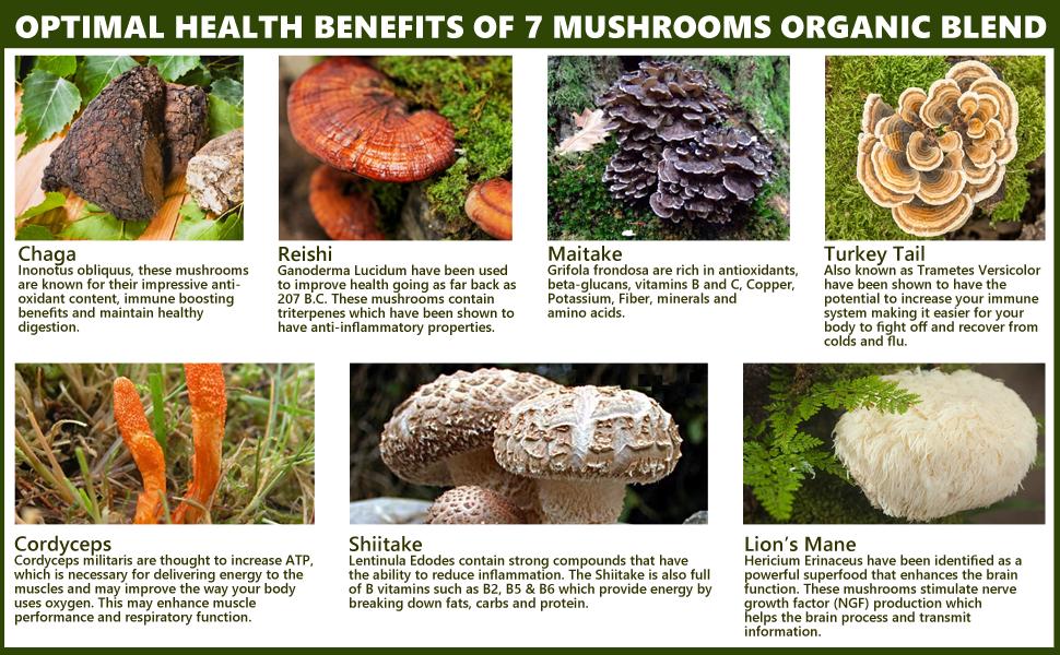 Amazon.com: Sayan 7 Mushrooms Organic Extract Powder Blend ...