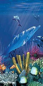 Antilles Dolphin