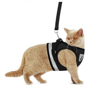 black cat harnesses