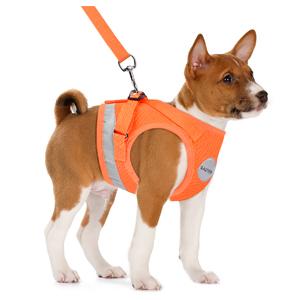orange dog harnesses