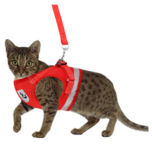 red cat harnesses