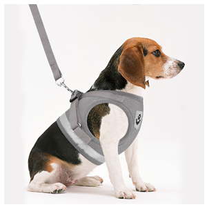 grey dog harnesses