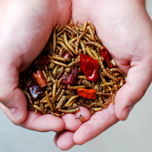 senior aging chicken supplement treat premium natural poultry feed chili pepper dried mealworms