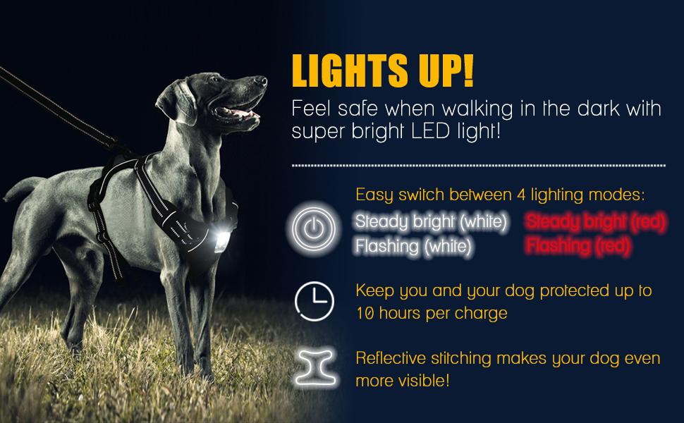 dog safety light