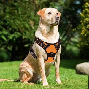 Dog Harness No-Pull Pet Harness Adjustable