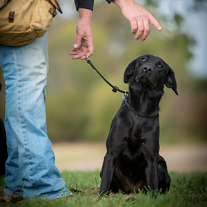 Training Your dog with Adjustable Leader