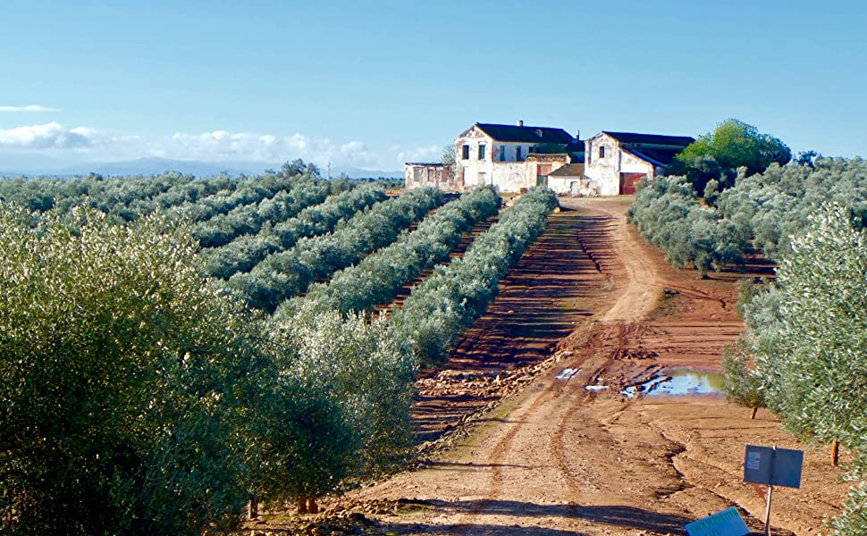 Extra Virgin Olive Oil Orchard