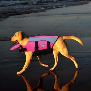 Amazon.com : Vivaglory Dog Life Jackets with Extra Padding