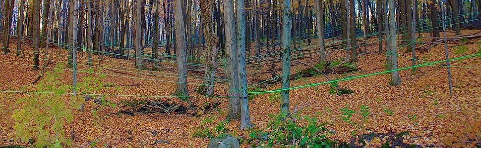 maple sugar bush