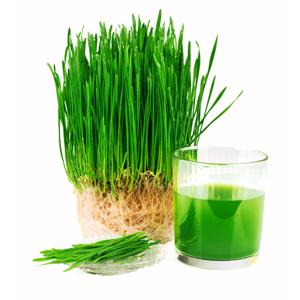 Smart Pressed Juice Grass