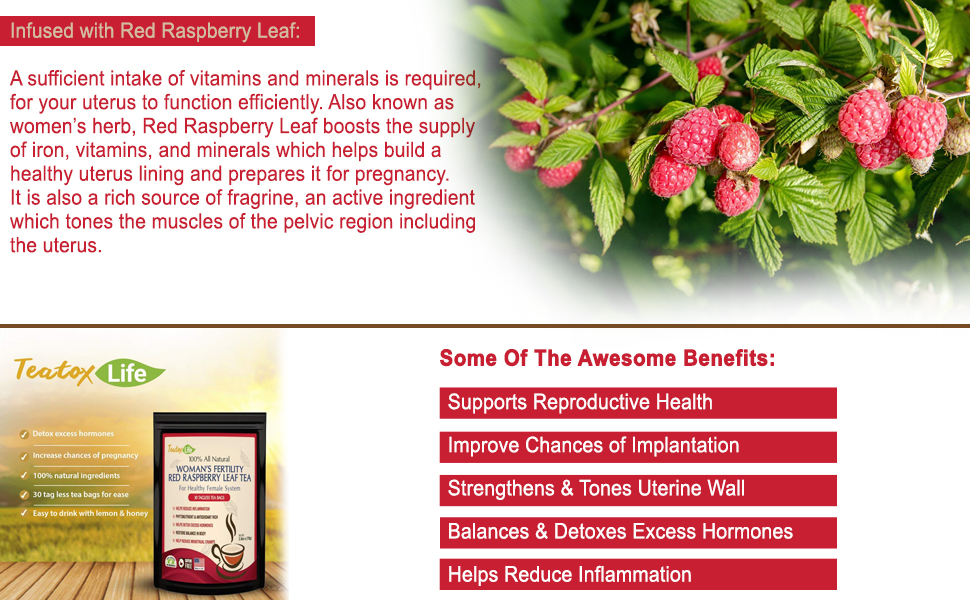 Red Raspberry Leaf Tea, Fertility tea with Rasberry leaf for women to get  pregnant fast, induce labor and
