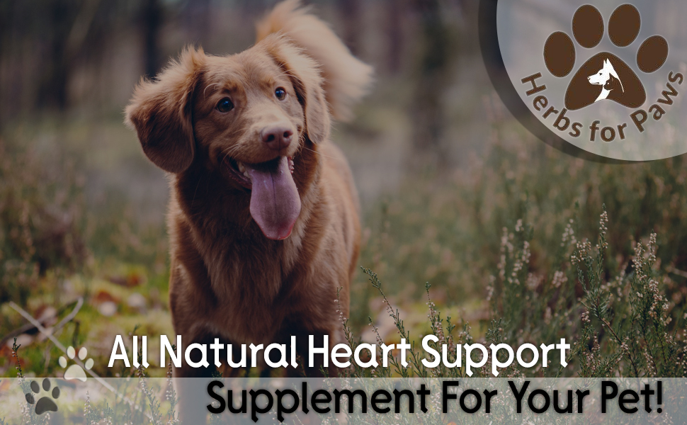 heart supplement cardiac for dogs cats pets heart health usda made in the usa murmur