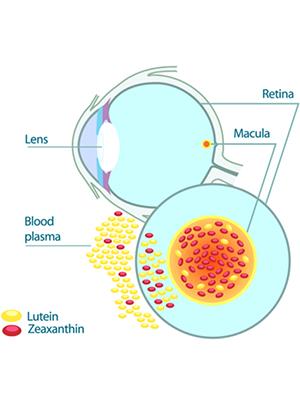 eye vitamins and lutein
