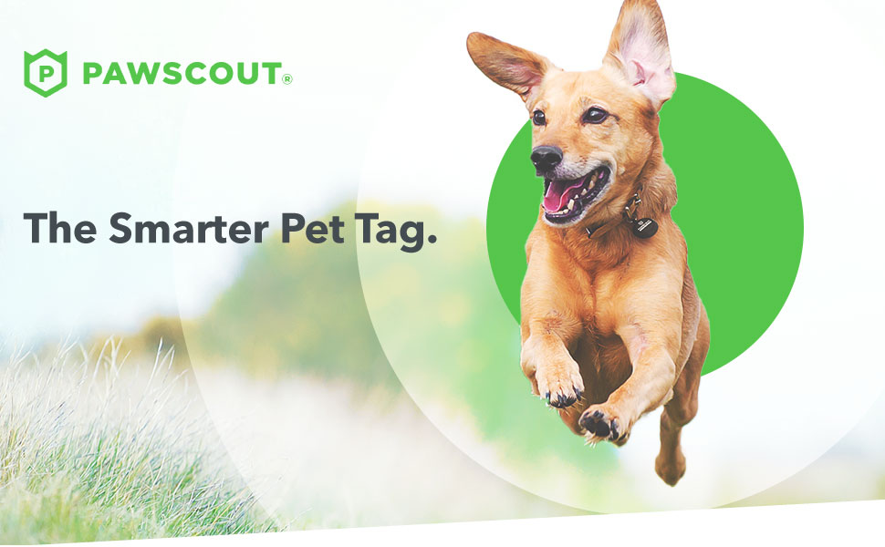 Amazon.com: Pawscout Smart Pet Tag: rastreador de mascotas ...