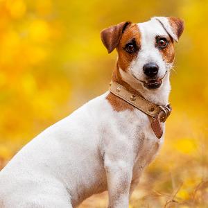 Amazon.com: Perro y Gato Limpiador de oídos Solución – Clara ...