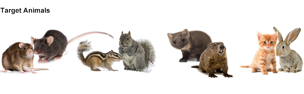 Amazon Com Angveirt Under Hood Animal Repeller Mice