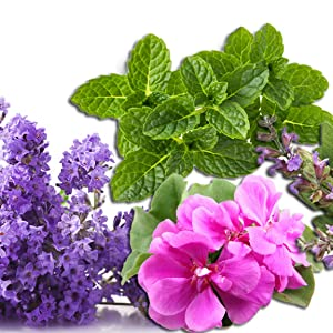 Lavender, clary sage, geranium, pain relief