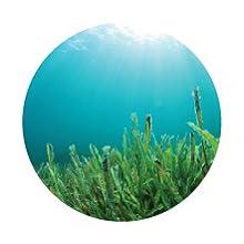 extract of microalgae