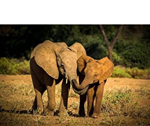 cf6da0050610 Every adventure has a purpose and every adventure should have an elephant.  As we learn and grow together we can make the dream of securing a future  for ...