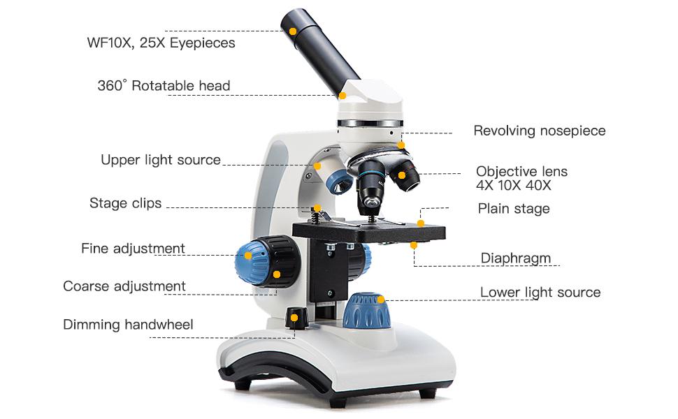 Compound Microscope Labeled - Micropedia