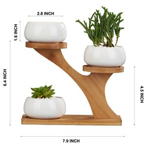 Flowerplus Round Succulent Planter With Bamboo Stand
