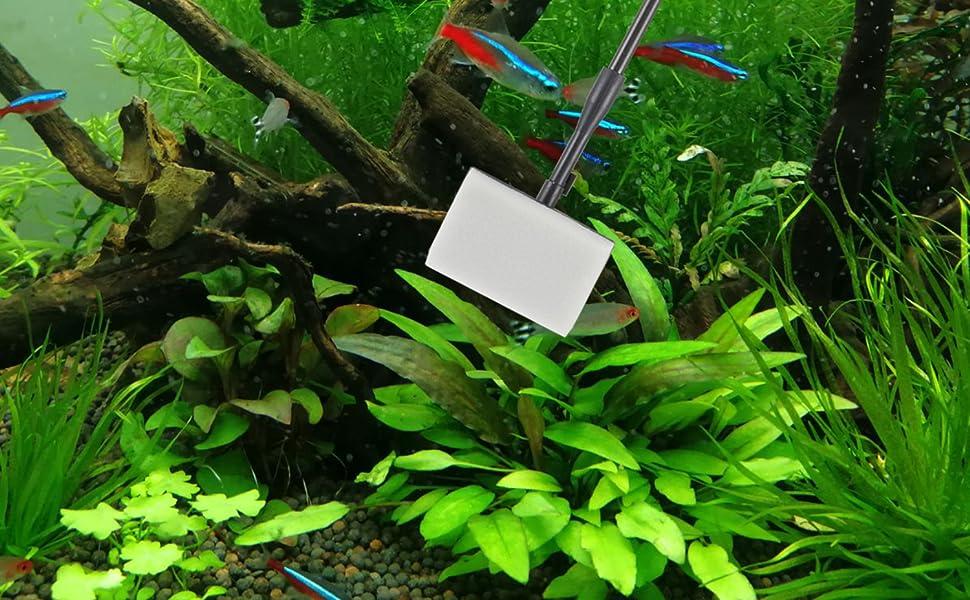 fish tank brush