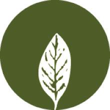 Powerful Plant Antioxidants