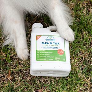 natural flea tick concentrate treatment
