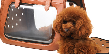 ibiyaya Airline Approved in-Cabin pet Bag for Small Breeds of Cats and  Dogs, a Stylish Alternative to pet Kennel and Dog Carrier Purse Products