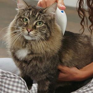 flea doctor flea comb on cat