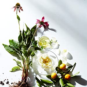 Naturopathica Holistic Health Ingredients with Intention Botanical Natural Clean Skincare Skin Care